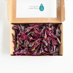 Beetroot Microgreens - Madar Farms