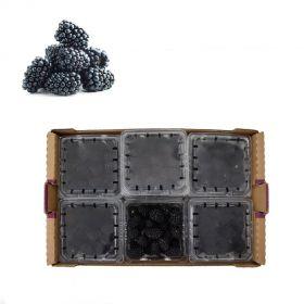 Blackberries box (12 Packet Box)