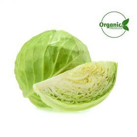 Cabbage Organic