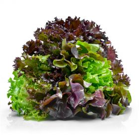 Lettuce Mixed Sanitized 250g