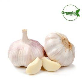 Garlic Organic