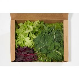 Kickin' Krunch Salad Mix - Madar Farms