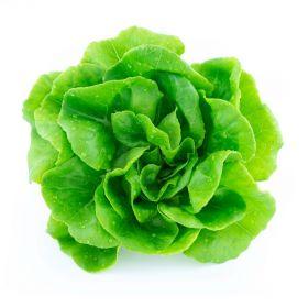 Lettuce Boston (Butterhead)