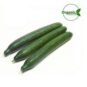 Cucumber English Organic