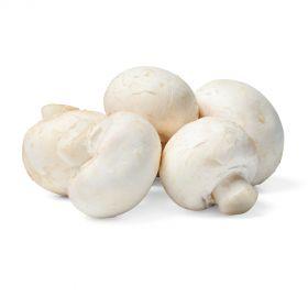 Mushroom Baby