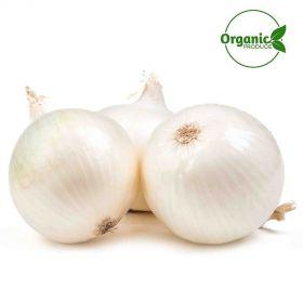 Onion White Organic