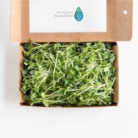 Spicy Radish Microgreens - Madar Farms