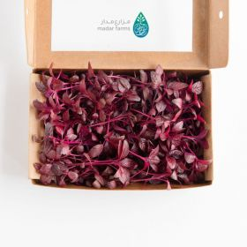 Amaranth Microgreens - Madar Farms