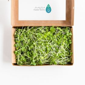 Arugula Microgreens - Madar Farms
