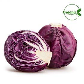 Cabbage Red Organic