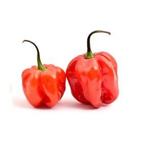 Habanero Pepper Red