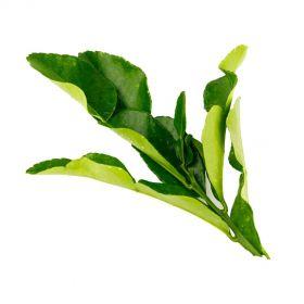 Lemon Leaves (Kaffir)
