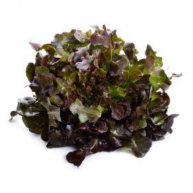 Lettuce Oakleaf