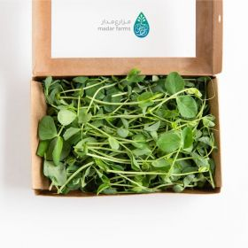 Pea Shoots Microgreens - Madar Farms