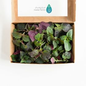 Purple Shiso Microgreens - Madar Farms