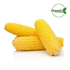 Sweet Corn Cooked Organic