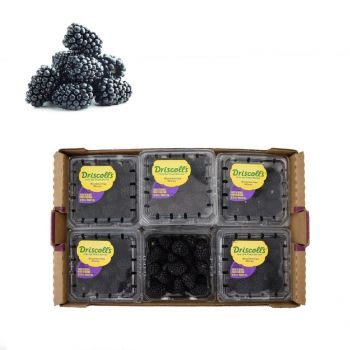 Blackberries box (12 Packet Box)