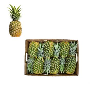 Pineapple Box 5 to 6 Pieces