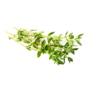 Thyme 20g Pack